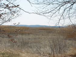 the salt marsh to the west of Salisbury Beach